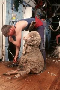 wool001